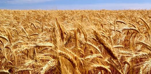 Купить сено в Ленинградской области