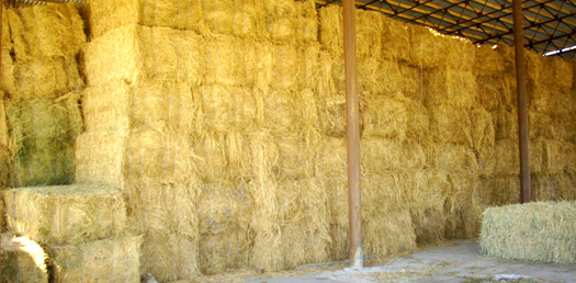 Купить сено в кипах